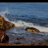 "DS2031 – Water Series – ""Acorn Barnacles"" – 15mn – Full HD"
