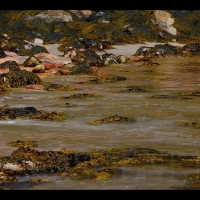 "DS2088 – Water Series – ""Macroalga Low Tide"" – 15mn – Full HD"