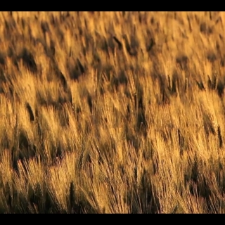 "DS3048 – Nature Series – ""Sunset Wheat"" – 38mn – Full HD"